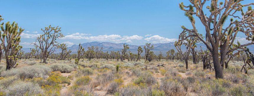 Community Of Baldy Mesa Cr Amp R Environmental Services